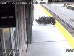 Turkeys Grab Next Train Out